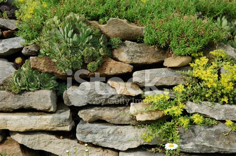 rock garden cground rock garden with ground cover stock photos freeimages