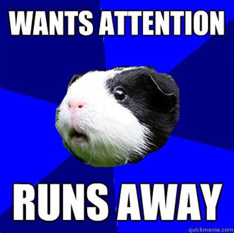 Guinea Pig Meme - jumpy guinea pig meme quotes pinterest