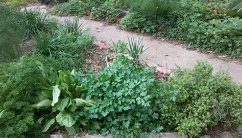 winter herb garden why i garden the herb cottage