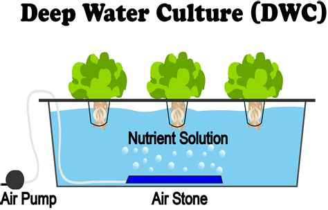 deep water culture dwc hydroponics nosoilsolutions