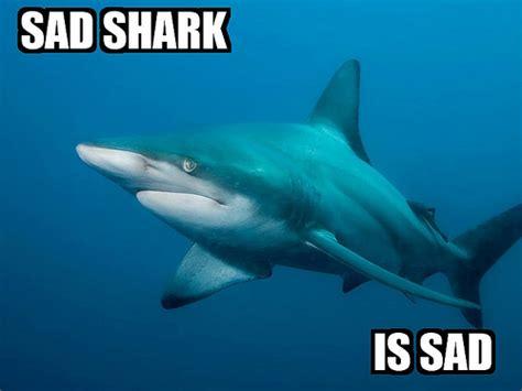 Sad Shark Meme - logan couture what s up ya sieve
