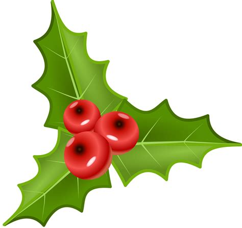 clipart holly clipart houx holly