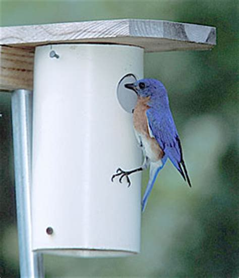 how to build bluebird houses styles of bluebird boxes