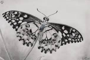 Table Skirt Ideas 10 Beautiful Butterfly Drawings For Inspiration Hative