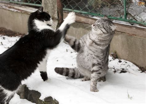 7 Ways To Stop A Cat Fight by Help How Can I Stop My Cat From Fighting Cat Aggression