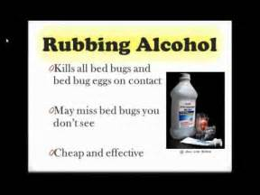 Alcohol Kill Bed Bugs How To Get Rid Of Bed Bugs If You Have A Bed Bug Problem