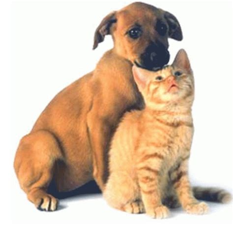 dogs mating with cats cat and mating pet photos gallery r1z3wk139z
