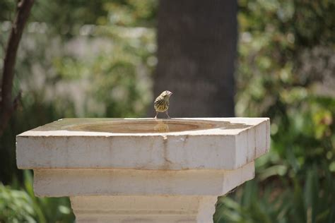 cheap bird baths the pros and cons of cheap bird baths