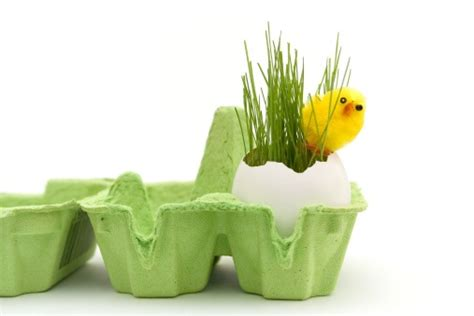 Eggshell Planters by Bunny Archives Everyday Inspiration From Ltd
