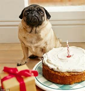 can dogs eat cake top dinners barking mad birthday cake daily mail