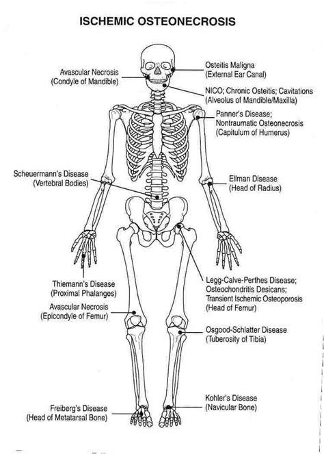 skeleton diagram labeled human skeleton joints diagram labeled diagram of