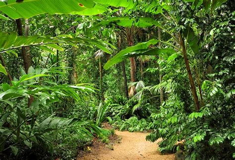 Botanical Gardens Cairns 11 Top Tourist Attractions Things To Do In Cairns Planetware