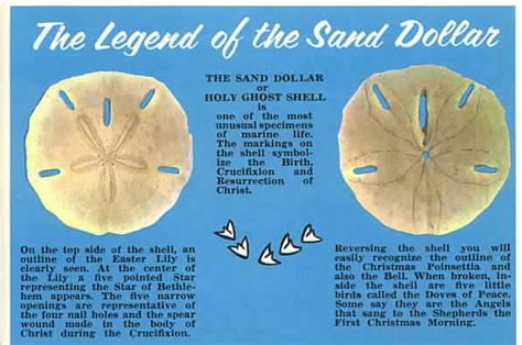 the with the sand dollar books ducks in my pool and other stories meaning of