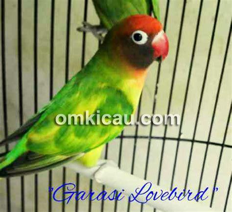 Harga Tebok Kandang Labet jual burung lovebird jakarta welcome to www sumberharga