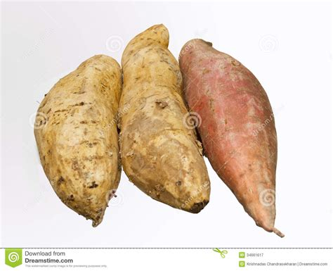 are sweet potatoes a root vegetable sweet potato royalty free stock photography image 34661617