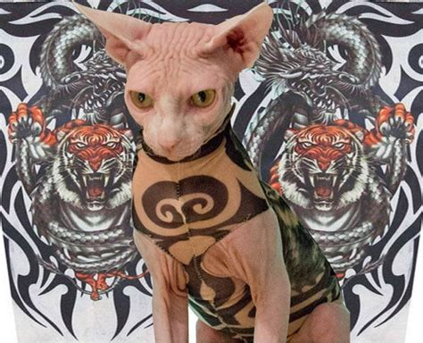 tattoo bald cat tiger and dragon tattoo inspired sphynx cat clothes a