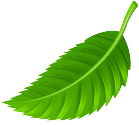 Leaf Clipart Leaf On Web Clipart Clipground