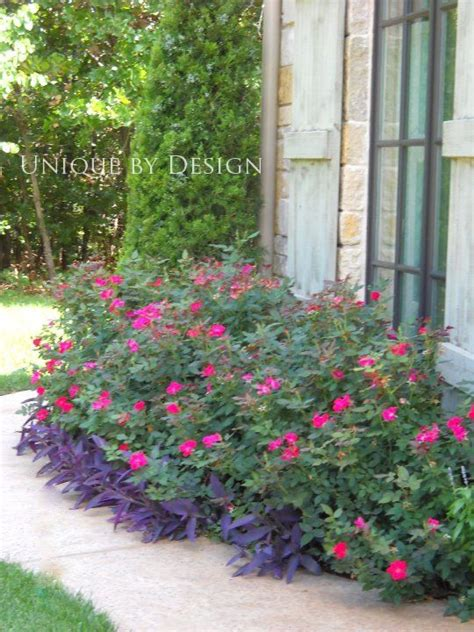 Landscape Ideas Using Knockout Roses 25 Best Ideas About Knockout Roses On Pool
