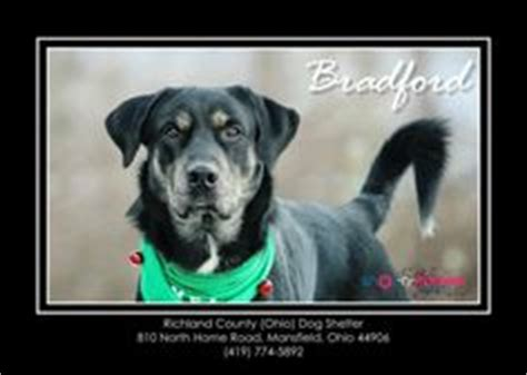 richland county warden pet adopt and rescue on 137829 pins