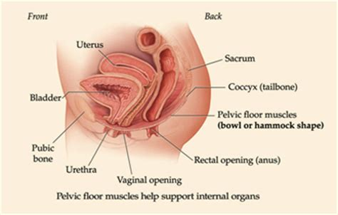 Tight Pelvic Floor Muscles by Pelvic Floor Therapy Featured Services