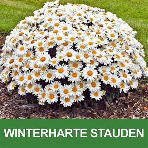 Pflanzen Garten Winterhart by Die Besten 25 Winterharte Stauden Ideen Auf