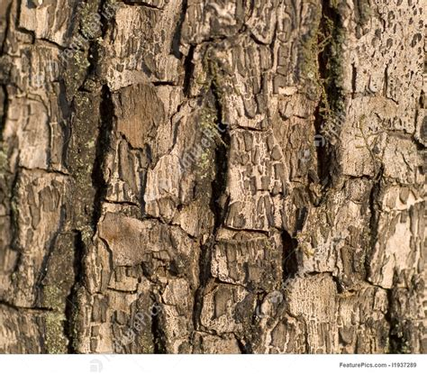picture  tree bark surface