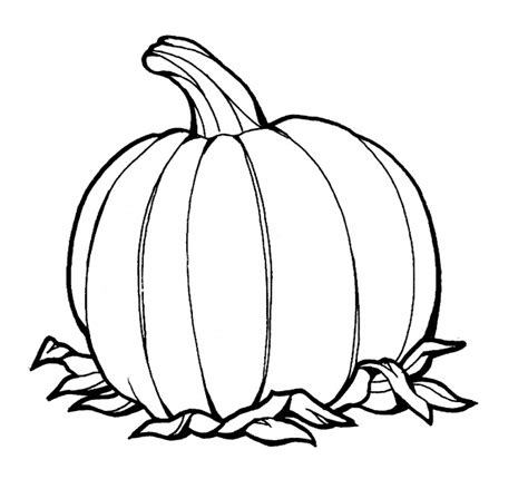 pumpkin leaf coloring pages pumpkin leaf clip art clipart best