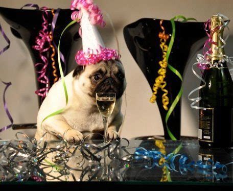 new year pug new years archives miami food pug