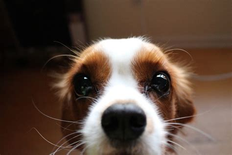 what do dogs whiskers do 10 most googled questions answered fitbark