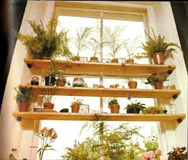 Best House Plants For Window Plants Page 5