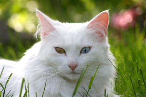 wallpaper cats animals animal cat hd wallpapers and latest pictures photos gallery
