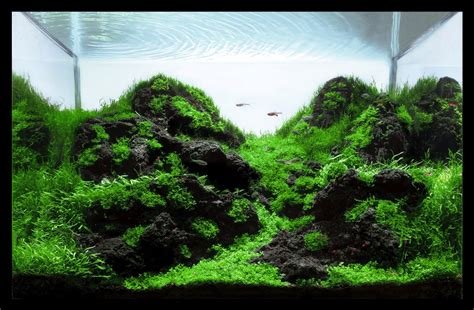 aquascape ideas tropical aswc top 12 aquascapes aquascaping world forum