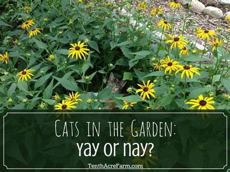 Yay Or Nay Wednesday 11 by Cats In The Garden Yay Or Nay Tenth Acre Farm
