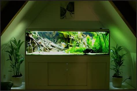 Pinset Aquascape south american tank akwarystyka aquariums fish tanks and discus