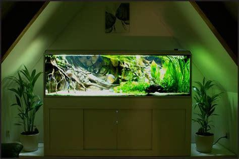 aquarium design glasgow south american tank akwarystyka pinterest aquariums