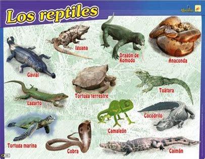 imagenes animales reptiles que animales son reptiles imagui
