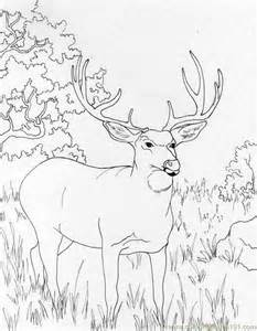 free deer coloring pages az coloring pages