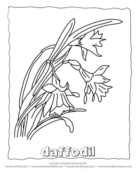 coloring pages of flowers with names 47 best images about daffodils on