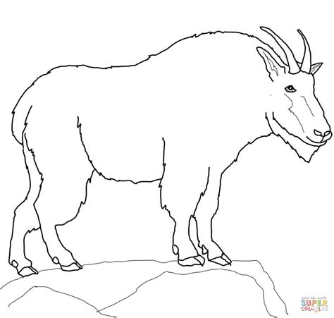 goat coloring book pages mountain goat coloring page free printable coloring pages