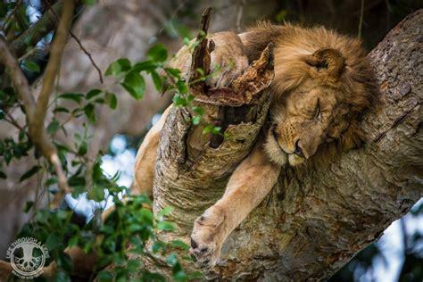 queen elizabeth national park uganda wildlife safari to queen elizabeth national park in uganda tour red
