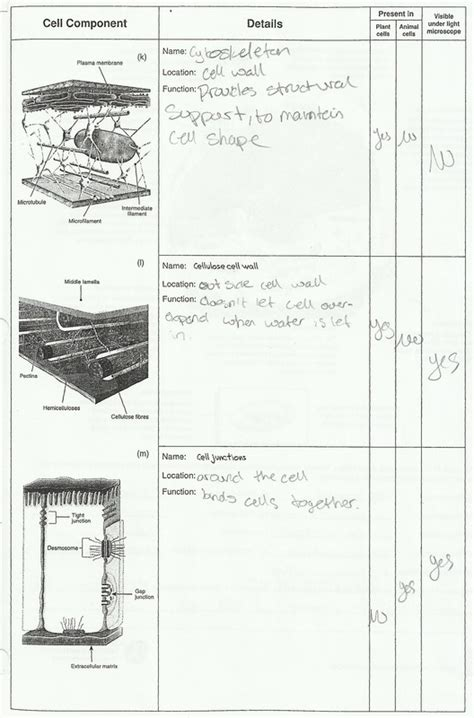 cell structure and processes worksheet ariel medeiros the bioslayers