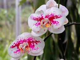 yuliawati makalah tanaman hias bunga