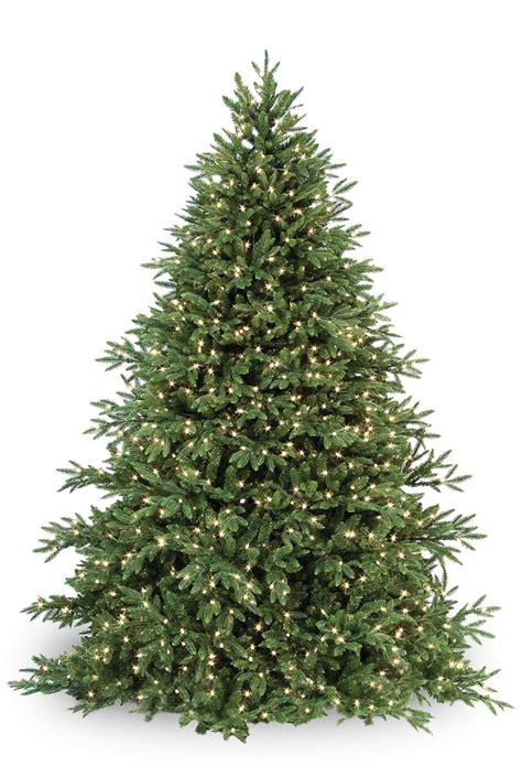fir christmas tree ideas clp7304 led 6 5 ft prelit warm white carolina fir tree 700 light count 10 year