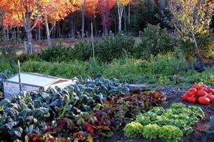 fall veggie garden fall vegetable garden bob vila