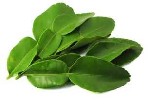 kaffir lime leaves balancing nutrition