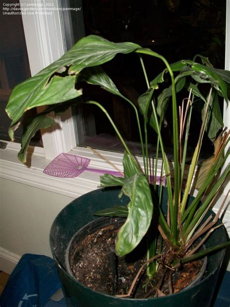 plant identification closed houseplant identification