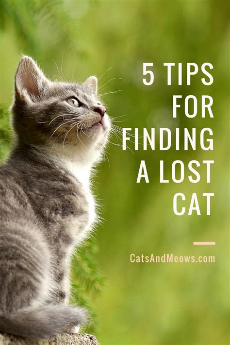 finding a lost 5 tips for finding a lost cat cats and meows