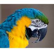 Macaw  Animals Photos