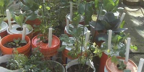 Nell Work November 2014 5 Gallon Vegetable Garden
