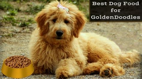 goldendoodle puppy diet best food for goldendoodles feed your puppy